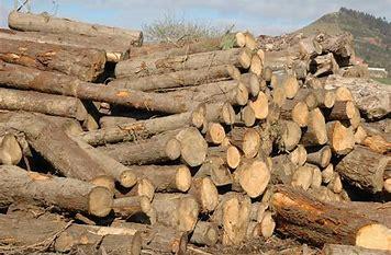 wood, madera, espiritu, planet